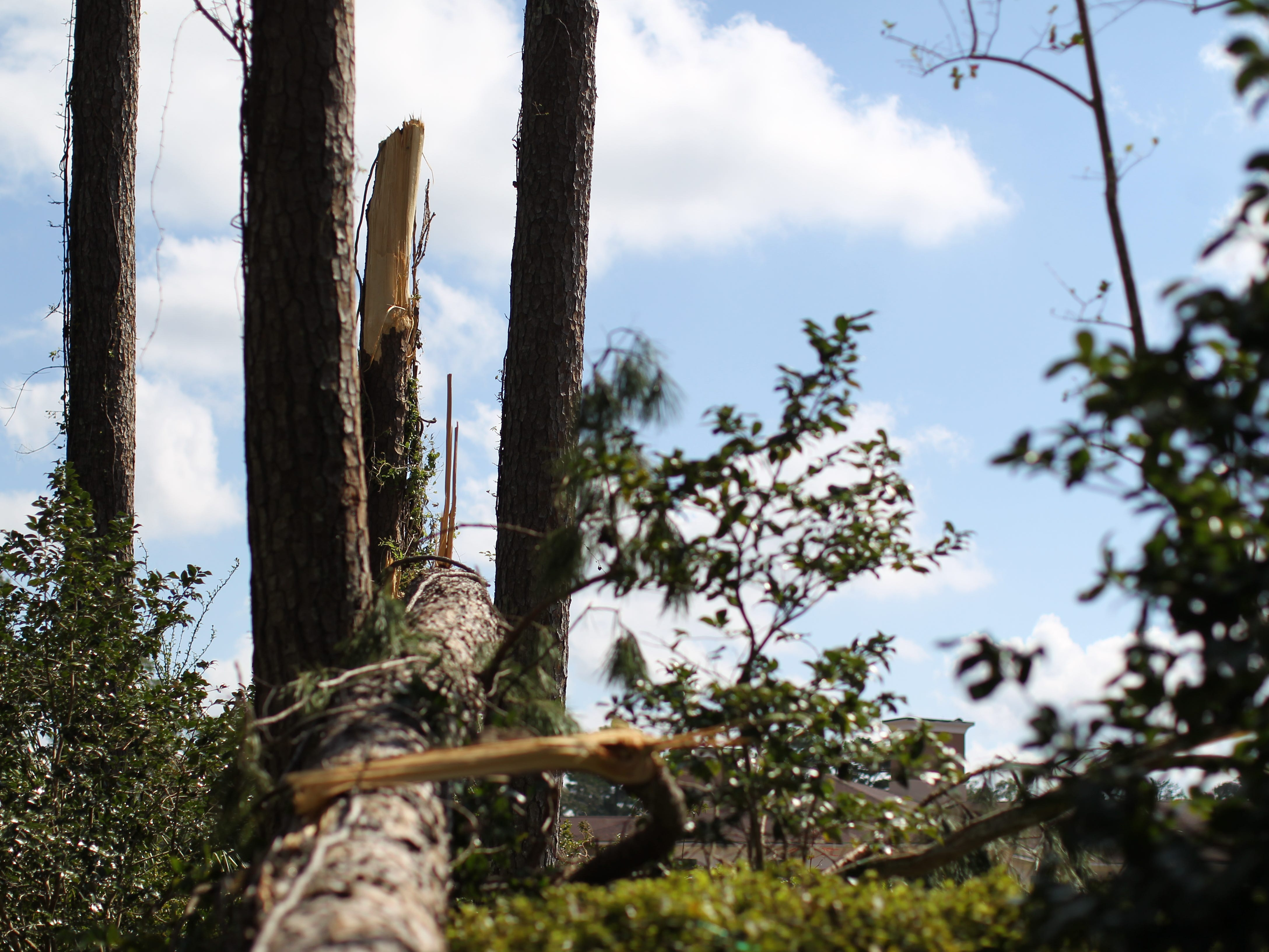 Tree and power line damage in Tallahassee along Glenview Drive following Hurricane Michael.
