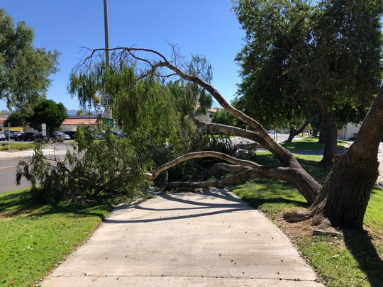 A fallen tree branch blocks the sidewalk on Lantana Street north of Daily Drive in Camarillo Monday afternoon as strong Santa Ana winds gusted in parts of Ventura County.