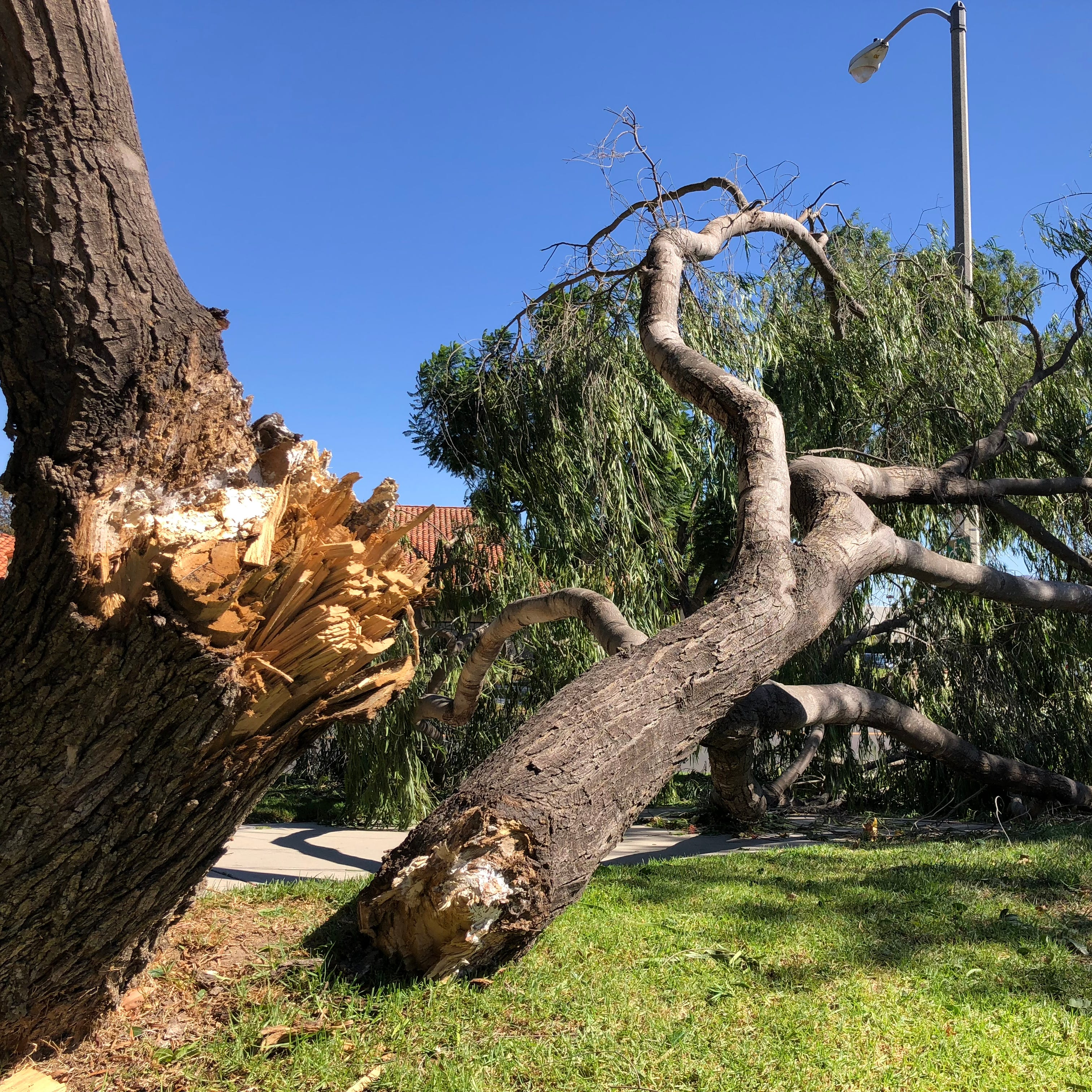 How fast were the Santa Ana winds in Ventura County? Learn that and more
