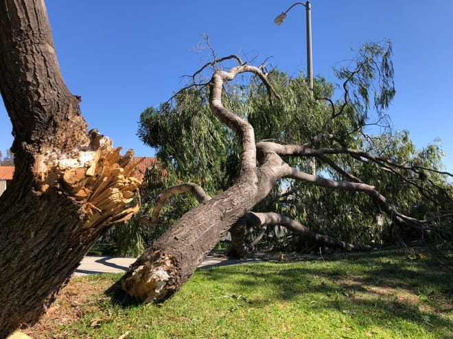 A broken tree branch blocks a sidewalk on Lantana Street in Camarillo amid strong Santa Ana winds Monday.