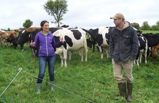 Wsf 1019 Ray Bossie Cow 2
