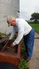 Bob harvests potatoes from a raised bed before the weather turned cool.
