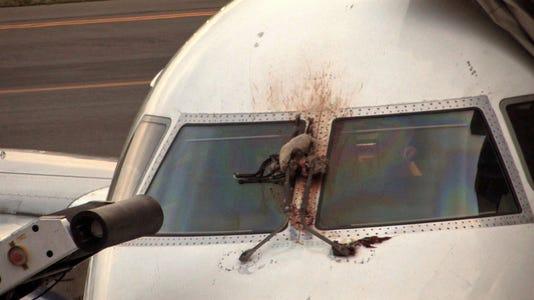 Ap Flights Bird Strikes A File Usa Ny