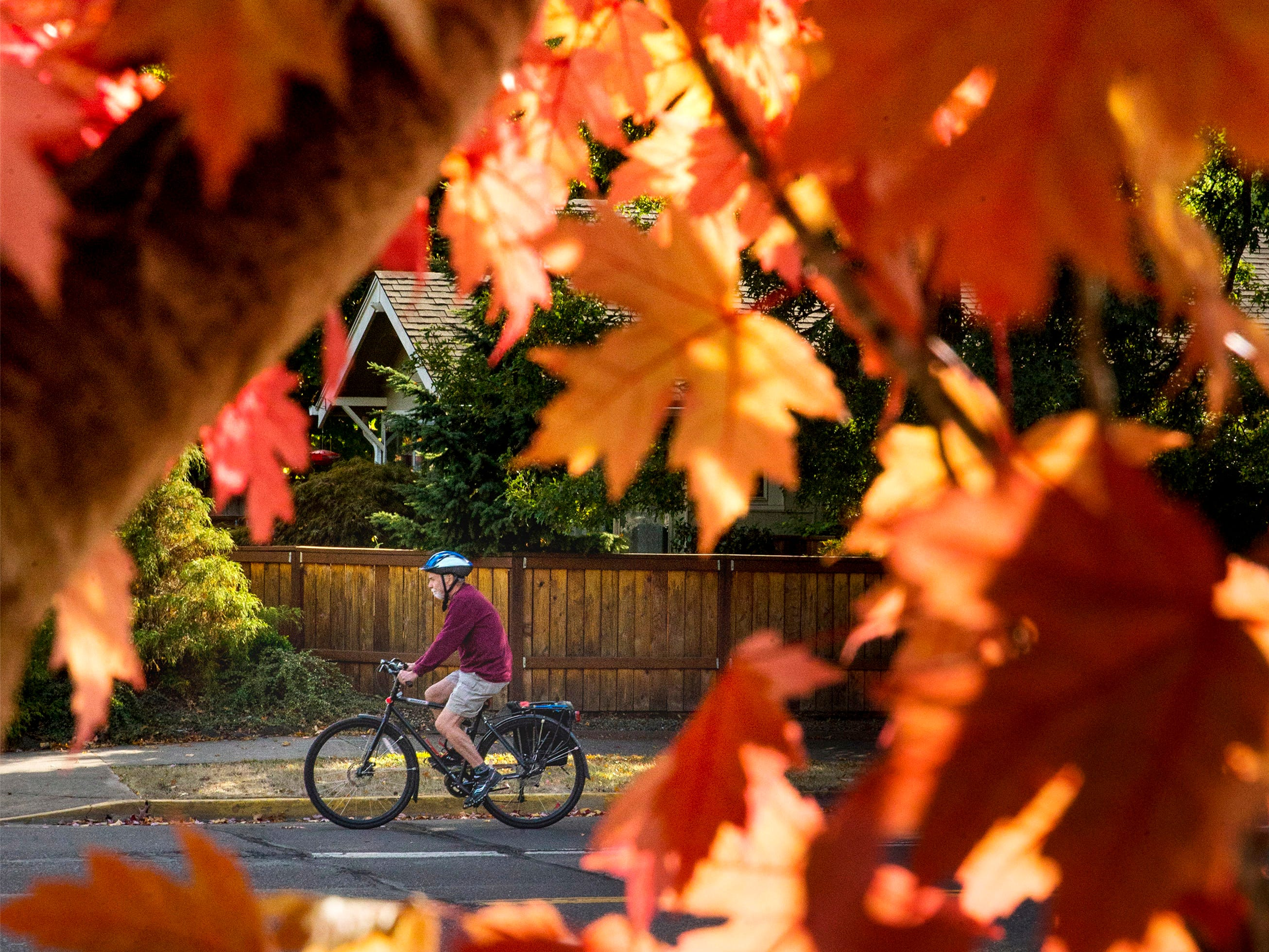 A cyclist is framed by fall foliage as he rides along 24th Avenue near Onyx Street in Wednesday, Oct. 3, 2018 in Eugene, Ore. Cool fall temperatures are creating the conditions for leaves on many trees to begin putting on a colorful display.