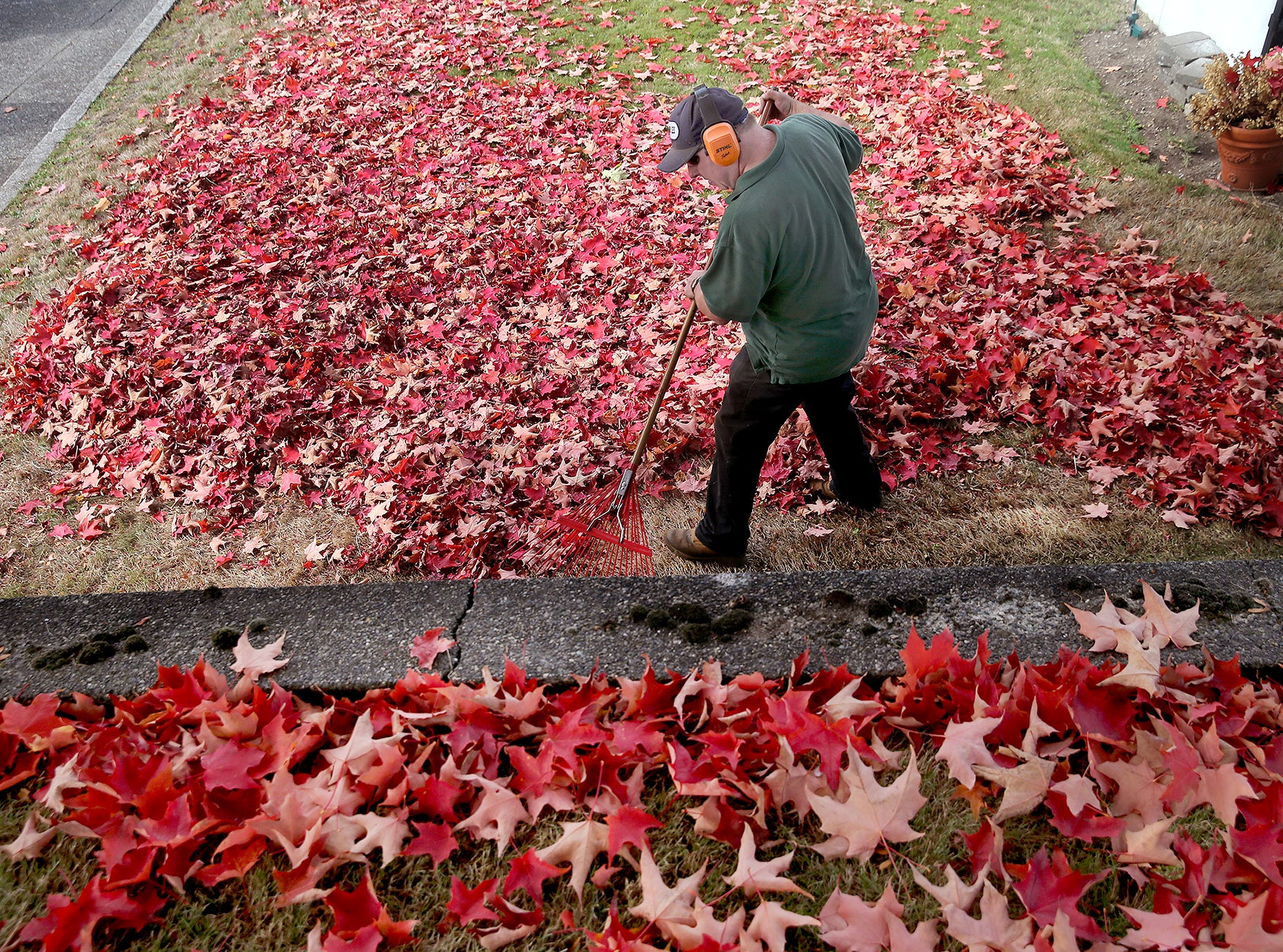 Les Hesseltine owner of Lawns by Les in Port Orchard rakes up fallen maple leave in an East Bremerton yard on Wednesday, Oct. 3, 2018.