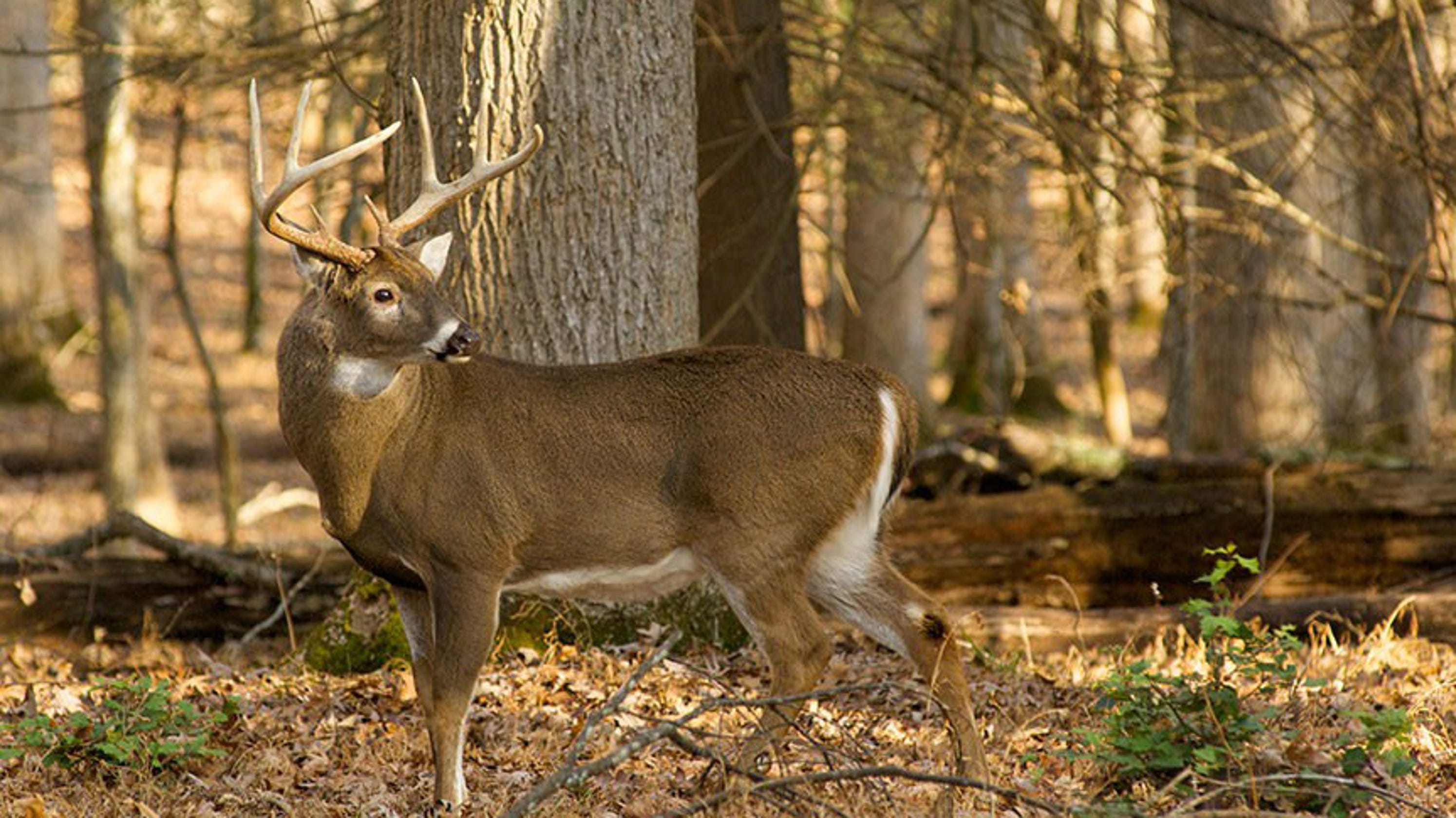 chronic wasting disease spurs new hunting fishing rule changes