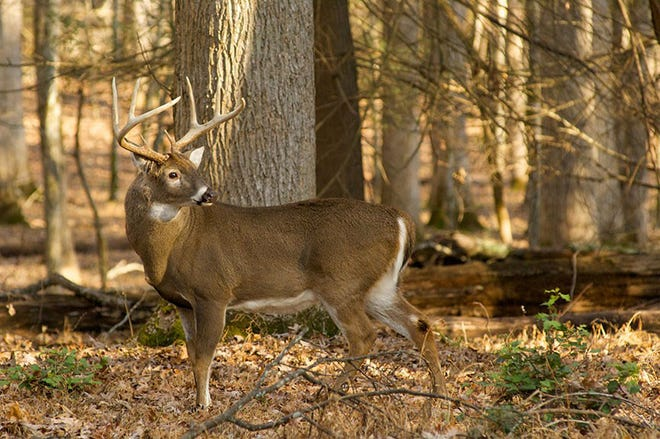 """Wildlife officials reported """"at least 40"""" deer in Madison County have died from a suspected outbreak of hemorrhagic disease."""