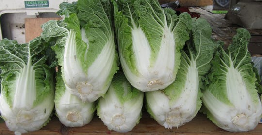 Napa cabbage from Blue Ribbon Farm.