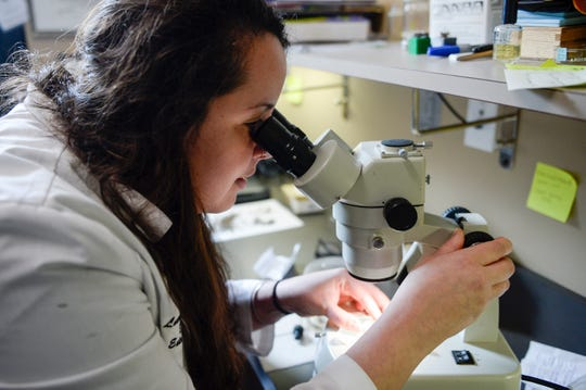 Camden County's mosquito specialist, entomologist Lauren Segreto works in her office inside the Camden County Environmental Center.