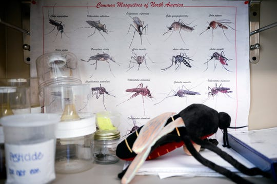 A mosquito chart inside the office of entomologist Lauren Segreto.