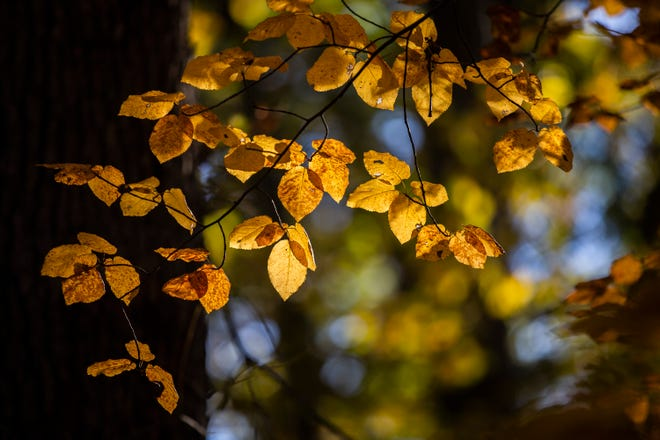 Fall leaves at Ledges State Park in 2018.