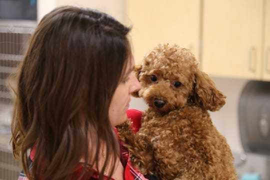 Dr. Jennifer Biasillo comforts Ami, a goldendoodle who was being treated for an upset stomach.