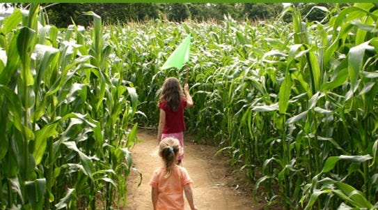 Behind the making a corn maze at Basse's Country Farm Market in Colgate