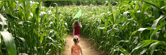 Corn Maze Inside