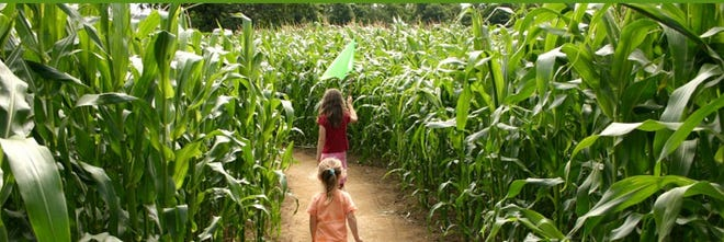 Basse's Taste of Country Farm Market is one of many spots around the Milwaukee suburbs to test your navigational abilities in a corn maze.