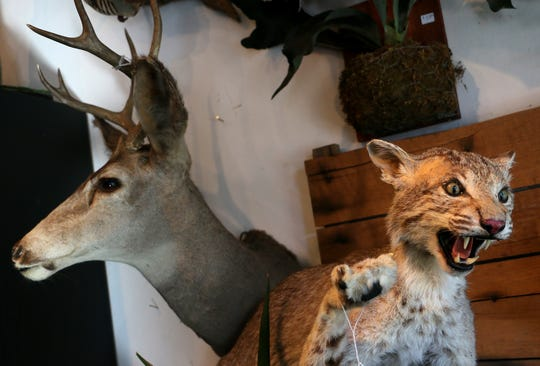 Taxidermy specimens are seen at the Natural Selection store in Reno on Oct. 12, 2018.