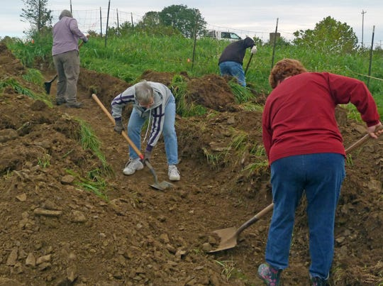 Volunteers (left to right) Helen Allen, Amelia Ammons, Clarence Allen, and Kate Delaney use shovels to carefully remove soil and smooth out the test strips that were created in order to look for evidence of burials outside the known boundaries of the cemetery.