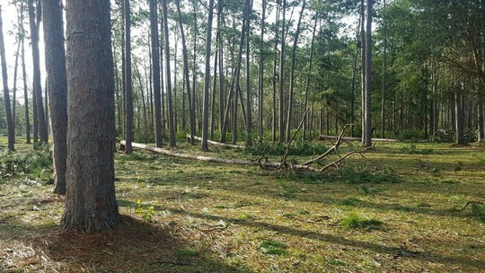 Hurricane Michael  leveled many pecan trees belonging to Maxwell Pecan Farms in South Georgia.