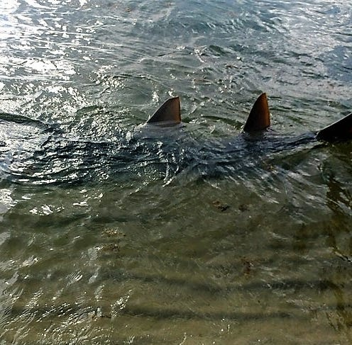 Celebrate National Sawfish Day on Wednesday
