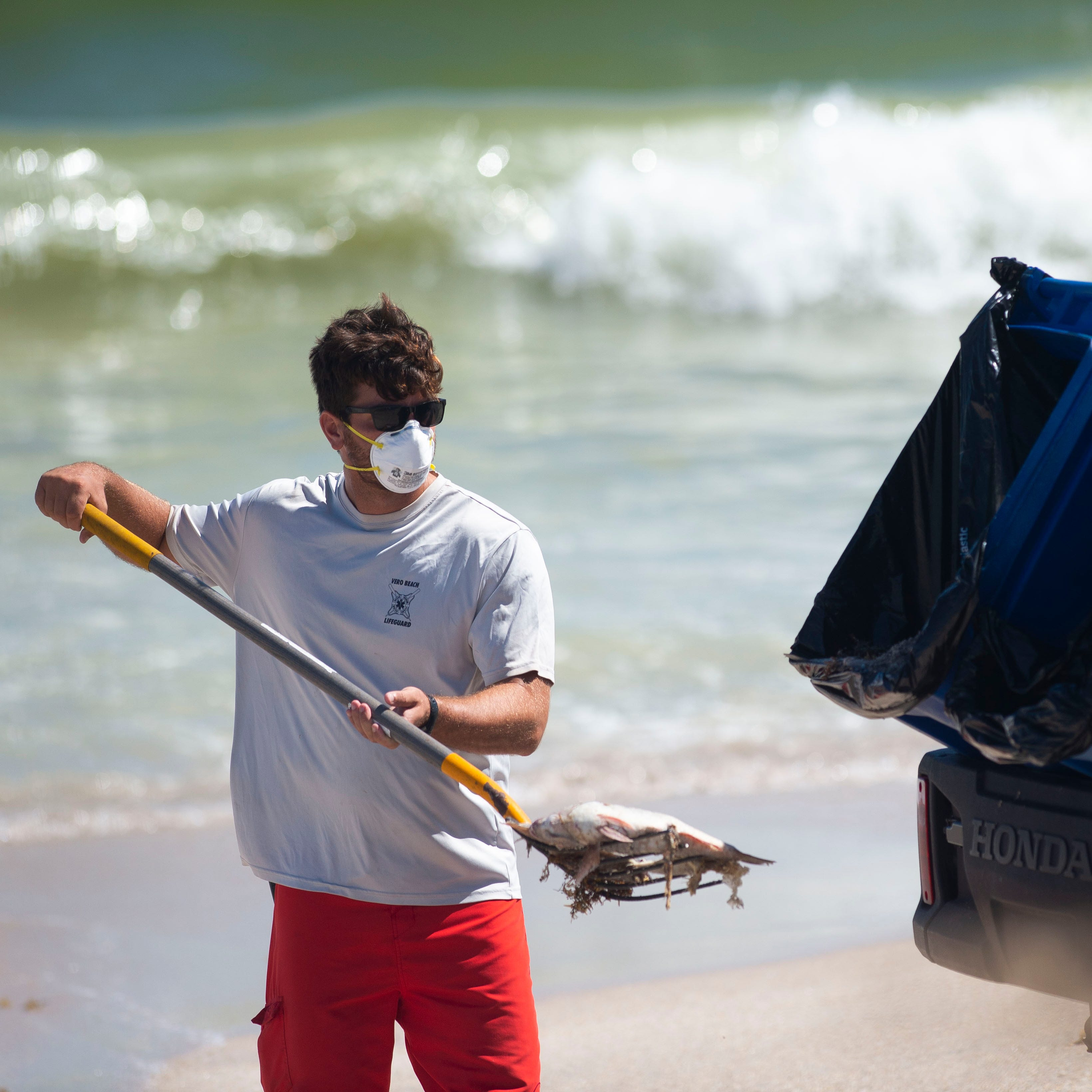 Vero Beach red tide is most toxic on East Coast this year| Red tide map link | Videos