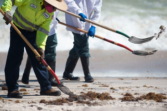 Wearing masks to protect themselves from red tide exposure, city of Vero Beach workers from ocean rescue, the recreation department and public works shovel dead fish into a trash bin Tuesday, Oct. 16, 2018 at Jaycee Park in Vero Beach.