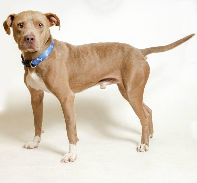 Buckeye is a heartworm positive dog from South Carolina.