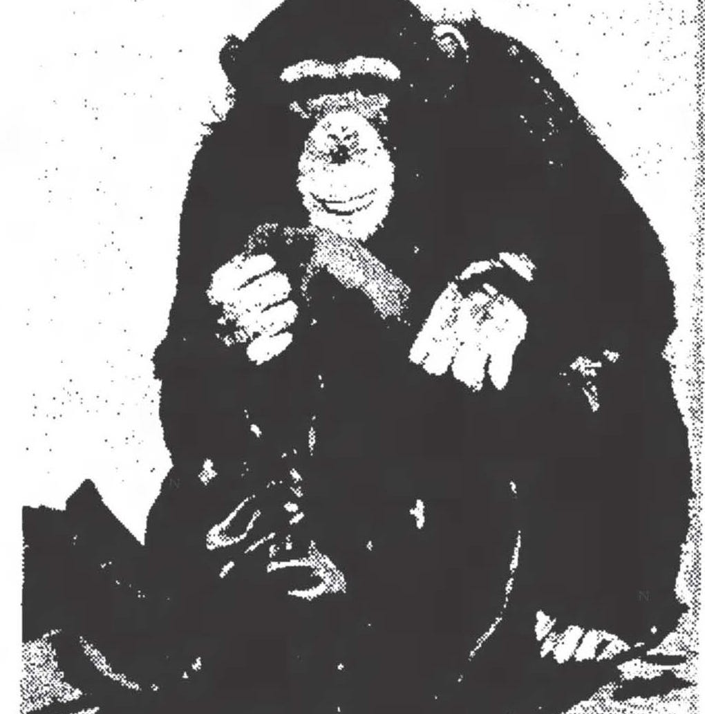 How Oswald the chimpanzee freed animals at El Paso Zoo before his tragic end