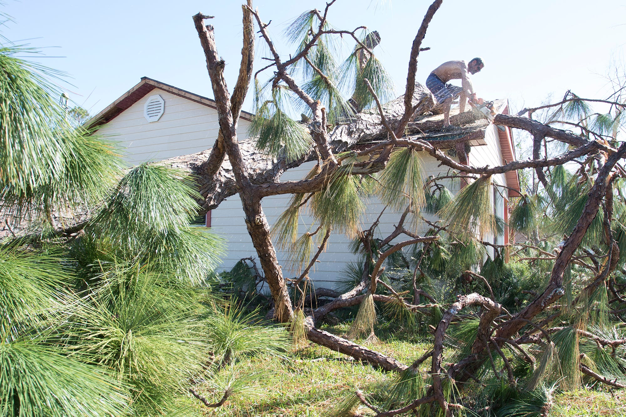 Jack Certalich removes a fallen tree from his house after Hurricane Michael in Northwest St. Andrews section of Panama City, Fla on Tuesday, Oct. 16, 2018.