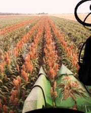Poor growing and market conditions made 2018 a tough growing season for sorghum and corn producers.