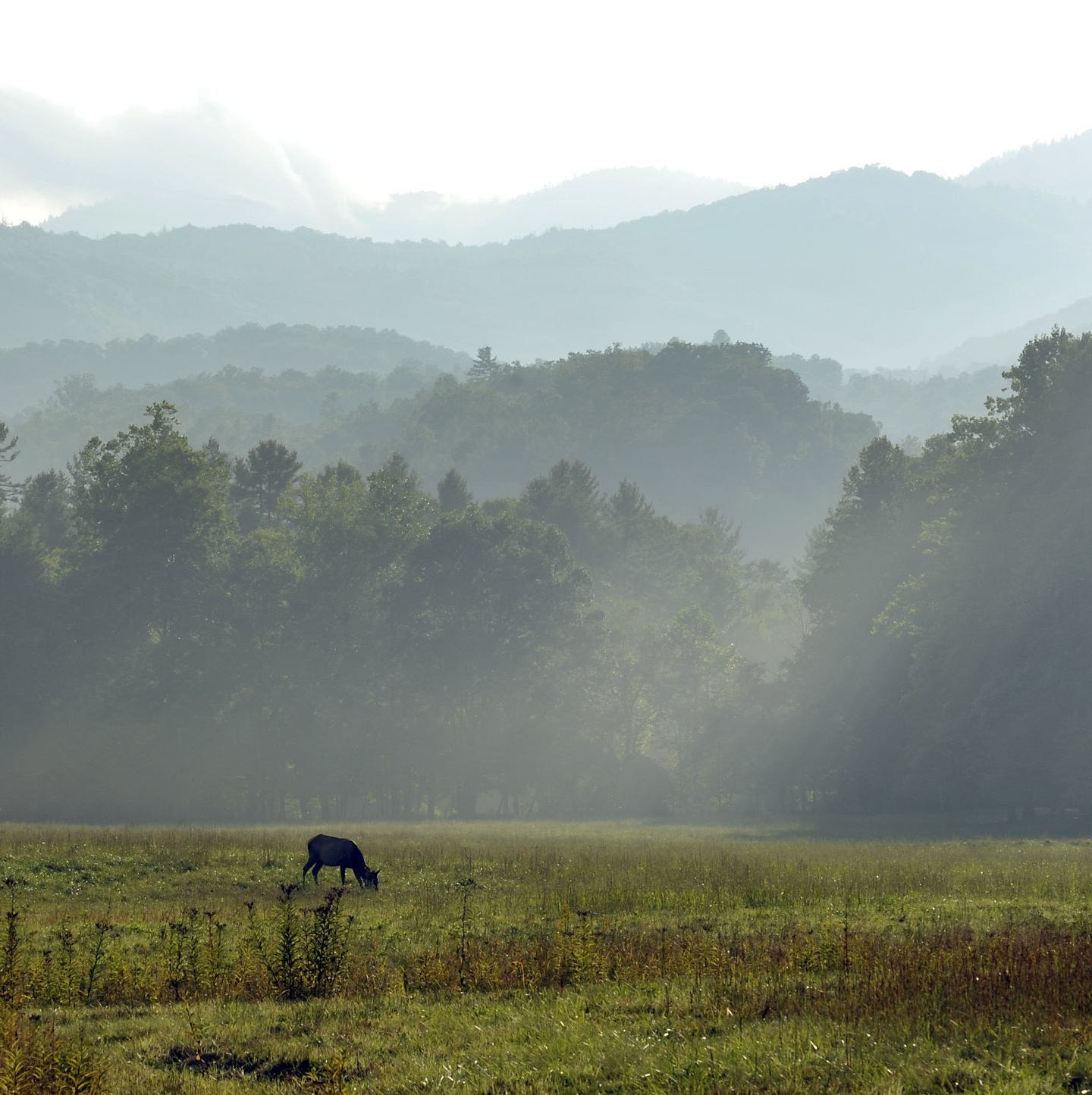 Answer Man: Great Smokies' Cataloochee volunteers missing this year? TDA in politics?
