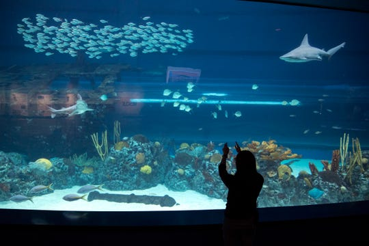 Catherine Razal, conservation and animal wellness specialist at the Texas State Aquarium, has a brand new job focused on animal welfare from the smallest fish to the heaviest dolphin. It's a job that's unique and fairly new in the industry so methods of determining welfare are being developed, she said.
