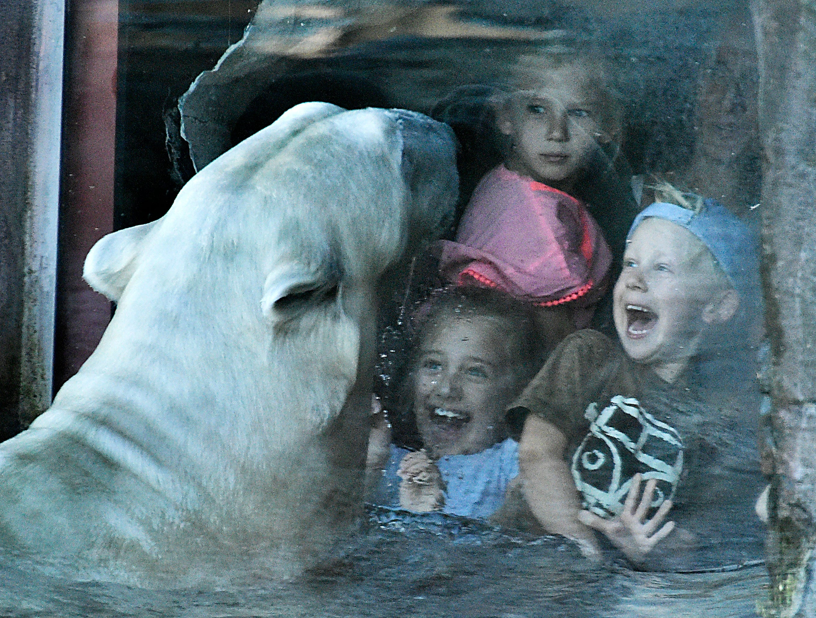 Separated by a security window, young visitors and a polar bear watch each other at the zoo in Gelsenkirchen, Germany, Tuesday, Oct. 16, 2018.