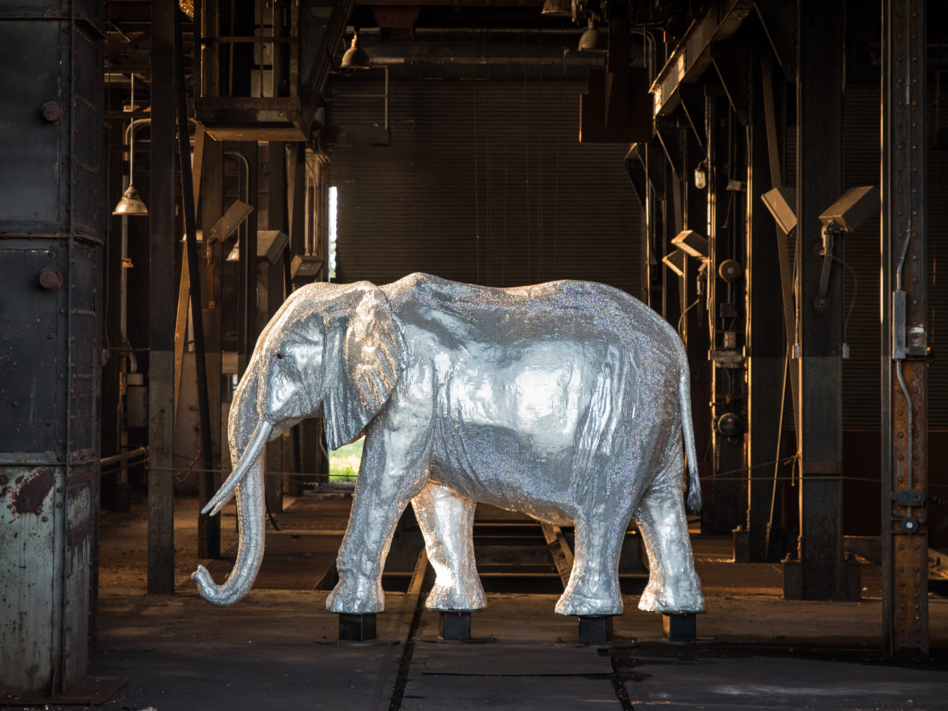 """The life-sized carbon fiber and resin composite African elephant is tucked away in a darkened building on the east side of the property. For safety and liability reasons, viewers may only observe the """"blinged out"""" pachyderm from behind a fence."""
