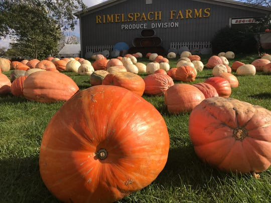 Rimelspach Farms & Produce Company in Fremont is focused on producing Atlantic Giant pumpkins this year. Owner David Rimelspach said he had a lot of 200- and 300-pound pumpkins for sale at his business, located at Ohio 12 and Ohio 53.