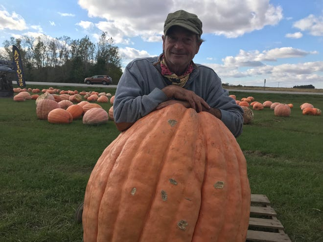 David Rimelspach, owner of Rimelspach Farms & Produce Company, leans on an Atlantic Giant pumpkin that weighs more than 200 pounds. Rimelspach said 2018 has been a good year for his company's pumpkin harvest.