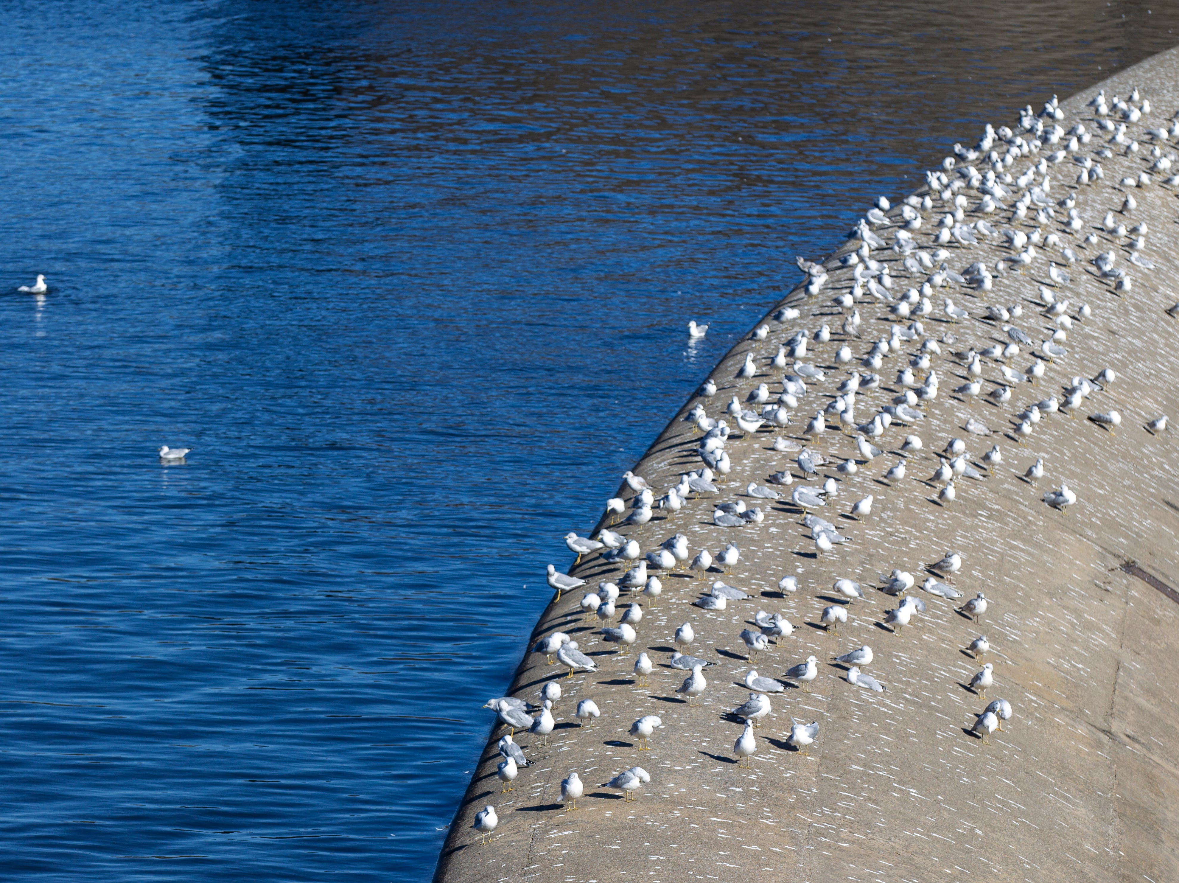 Gulls rest on emergency spillway as water swells up past the beach on Monday, Oct. 15, 2018, at the Coralville Lake dam.