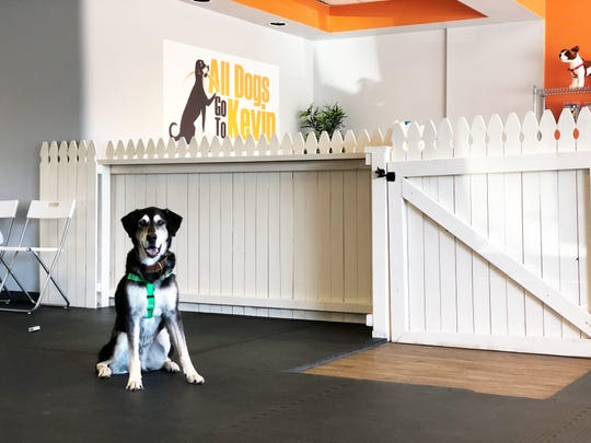 """""""V"""" (V for Vendetta) an 11-year-old shepherd/lab mix was the inspiration for the All Dogs Go to Kevin logo. The new dog training facility is spacious, clean and modern."""