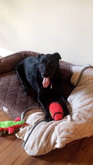 Harley loves relaxing on her bed and playing with squeaky toys.