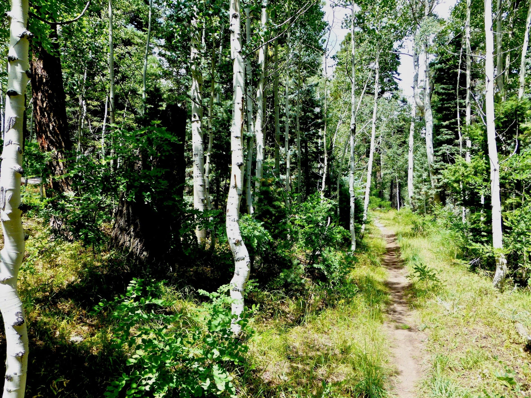 From the East Rim View in Kaibab National Forest, the Arizona Trail travels through lush woods, making for a shady summertime hike.