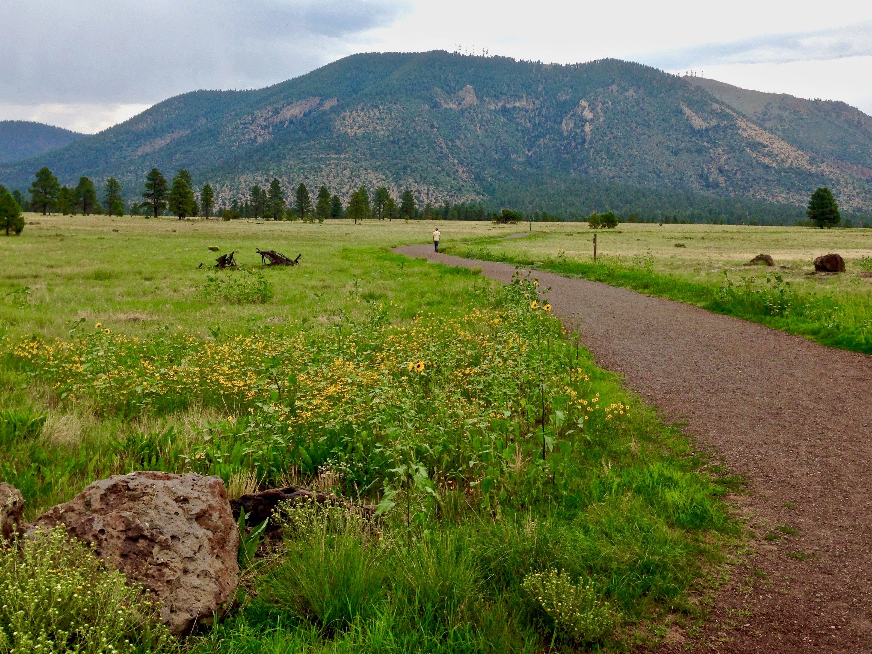 A segment of the Arizona Trail makes a gentle meander through the meadows of Buffalo Park, not far from downtown Flagstaff.