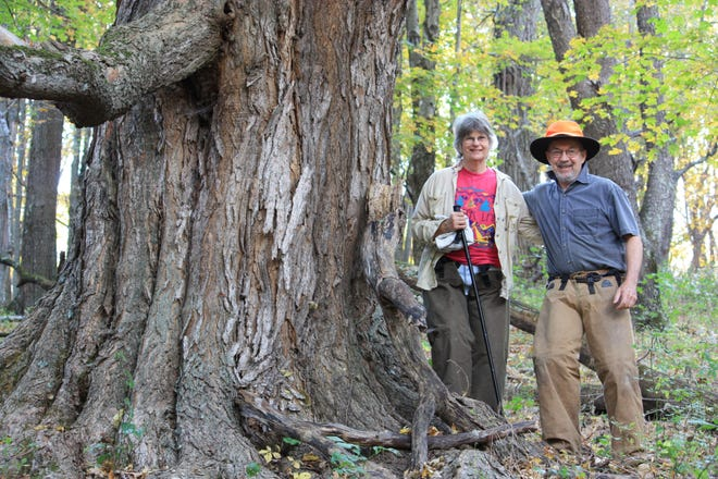A stand of old-growth forest on Bill and Lynn Limpert's Bath County land.