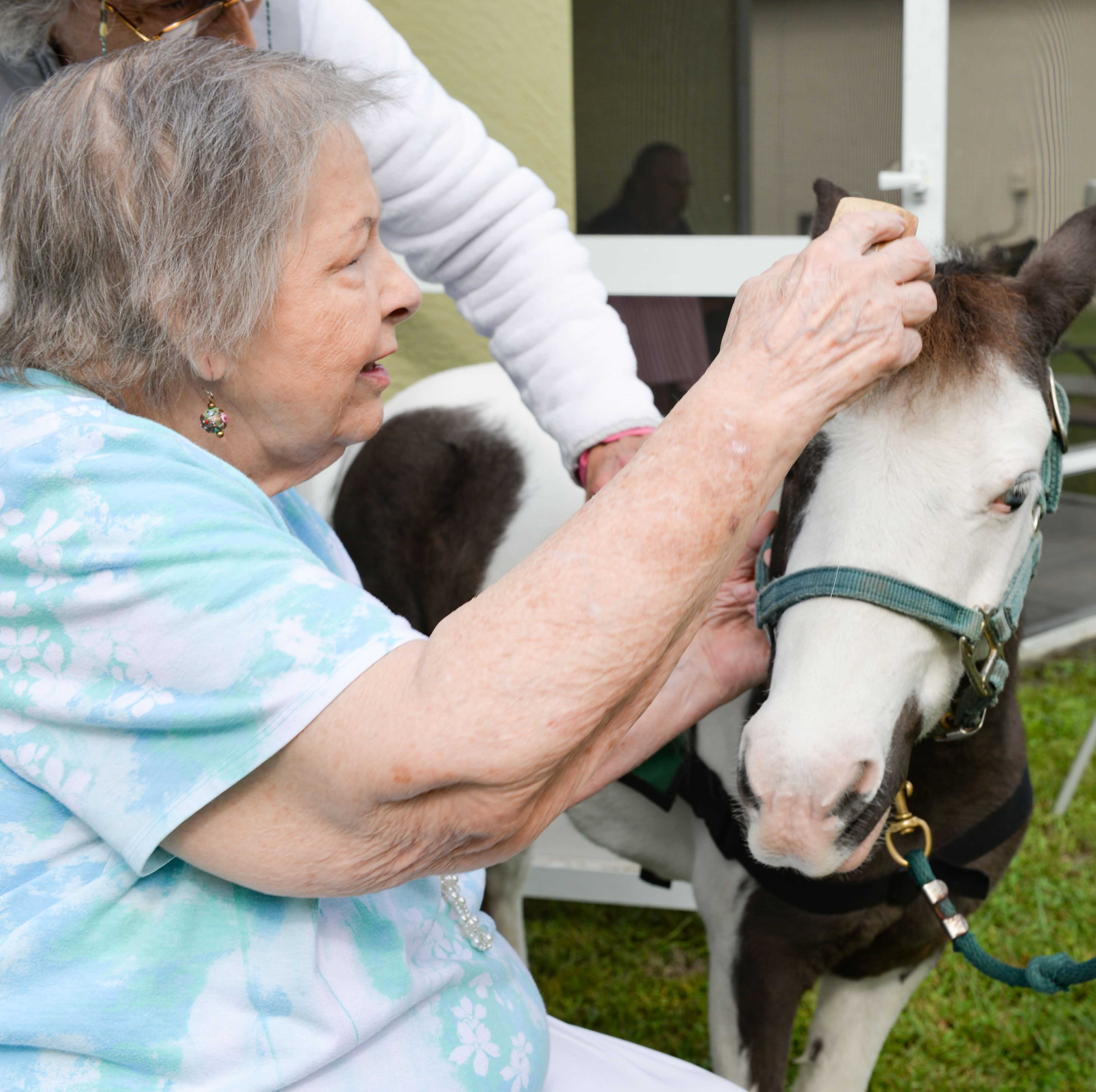 Treasure Coast Hospice arranges surprise visit from Healing Hoofs Therapy Horses