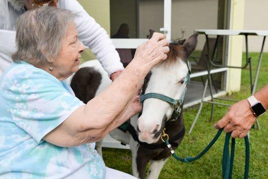 Horse Photo 10