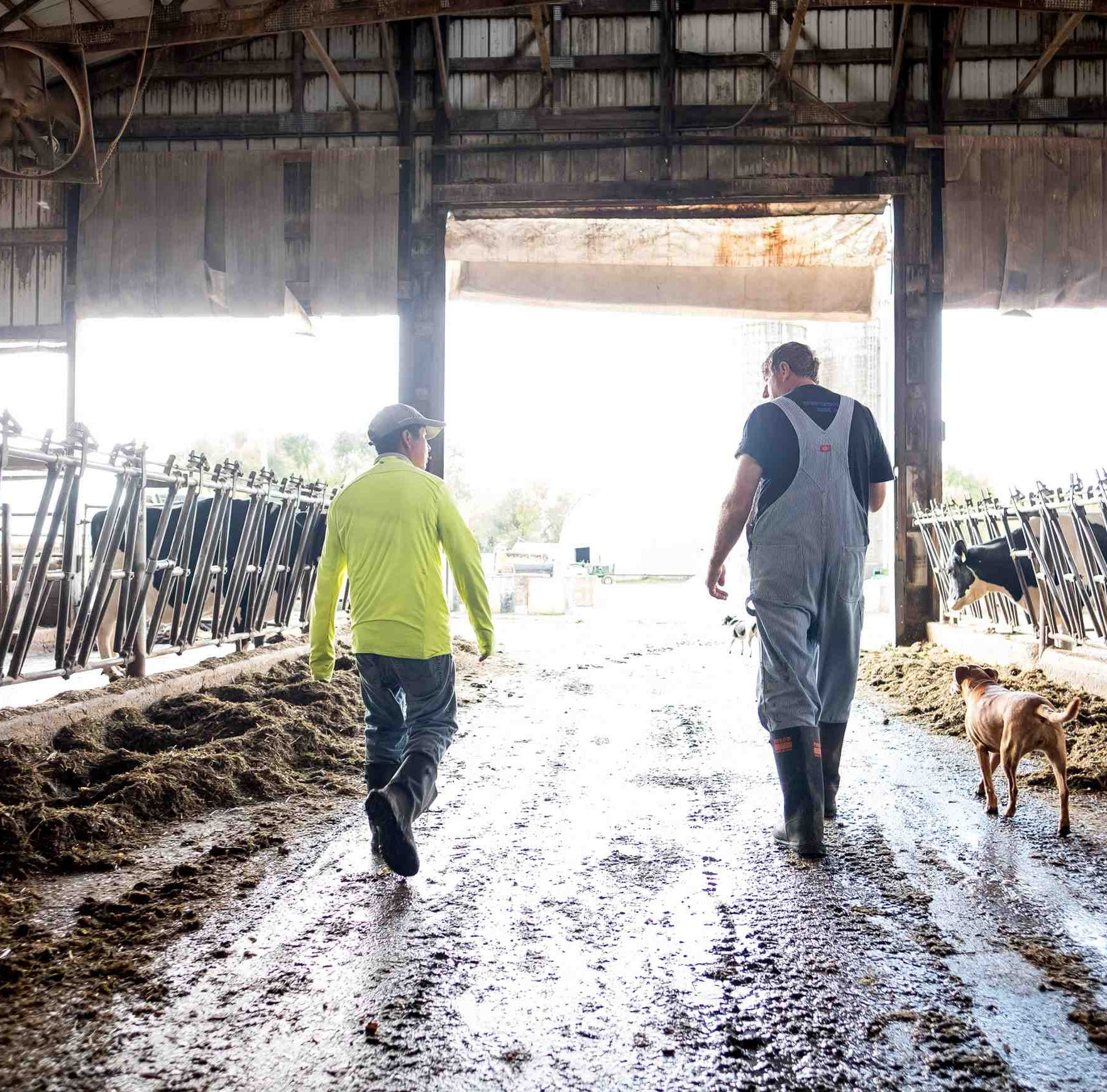Non-profit looks to build connections between midwestern dairy farms and immigrant workers
