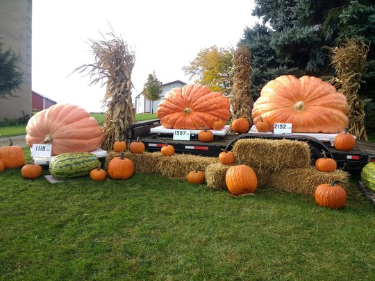 Nearly 2.5 tons of prize-winning giant pumpkins grace a display in front of Debbie Gantner's home on Highway 44 outside of Oshkosh.