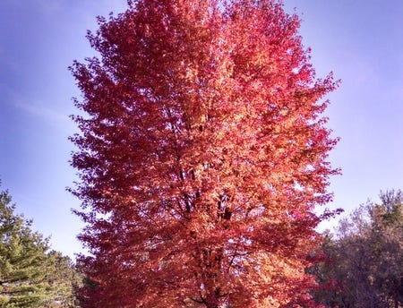 Crisp days of autumn spark boyhood memories