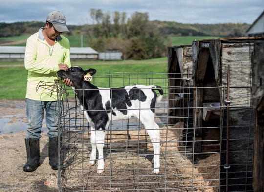 Roberto Tecpile, a native of Astacinga, Veracruz, Mexico, is seen with a 3-day-old calf at the Rosenholm dairy farm in Cochrane, Wis. Tecpile has spent nearly 20 years in the United States, the past four working for farmer John Rosenow.