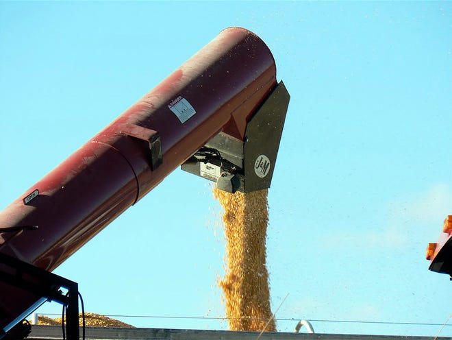 Properly stored high moisture shell corn is an excellent source of energy for dairy and livestock animals without having the additional cost of mechanical drying and handling as dry grain.