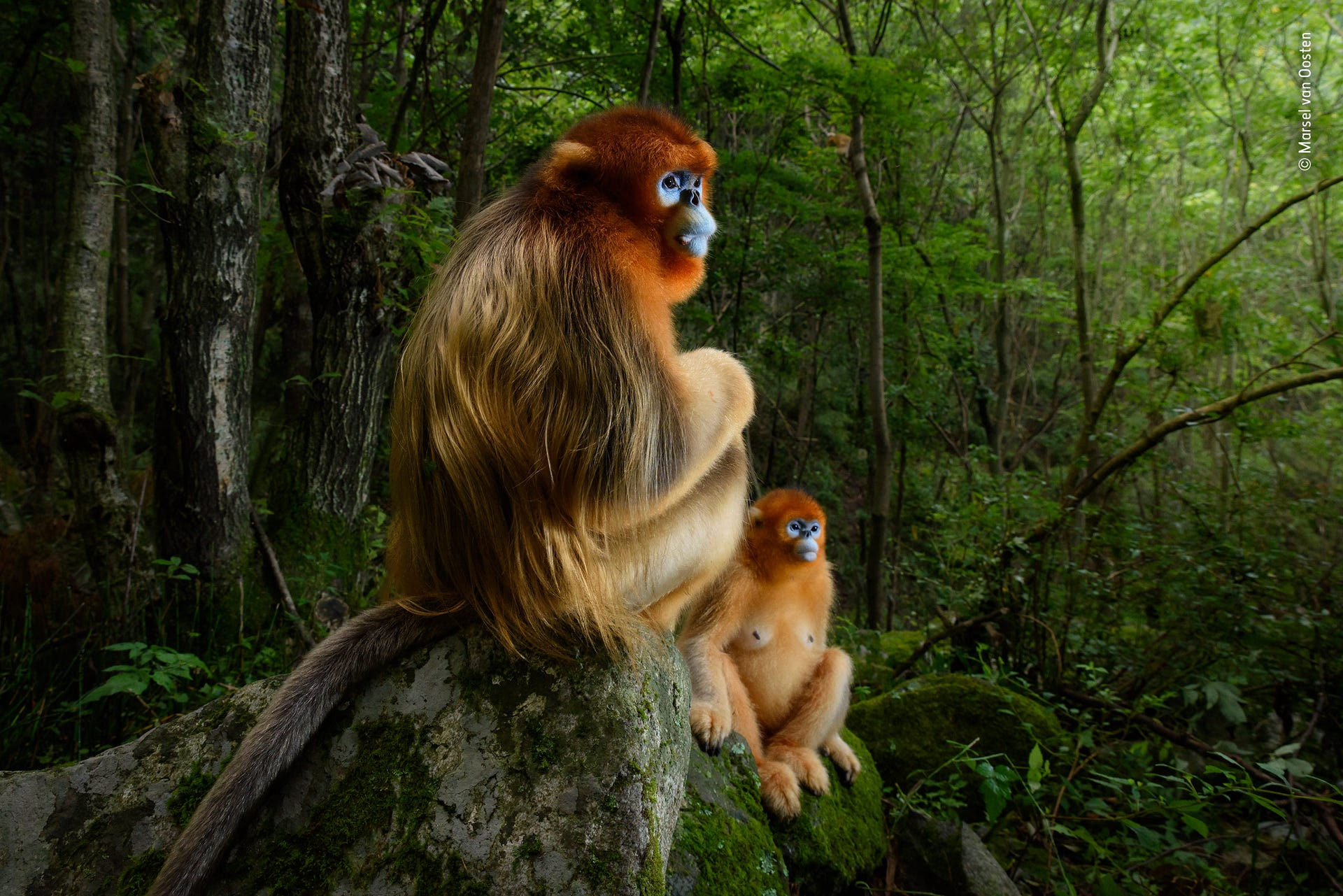 Winners of the Wildlife Photographer of the Year 2018 competition
