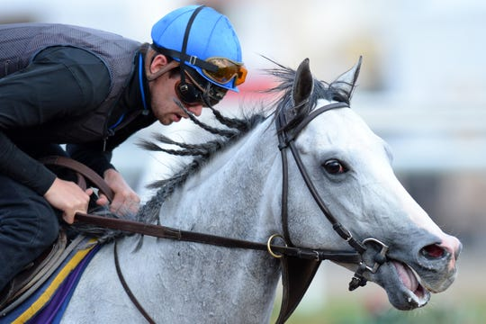 Disco Partner runs the dirt track during workouts for the 34th Breeders Cup at Del Mar Thoroughbred Club.